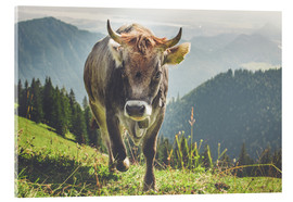 Acrylglas print  Cow in the mountains - Michael Helmer