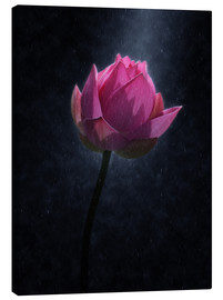 Canvas print  Lotus flower in the rain