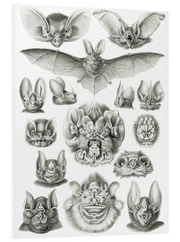 PVC print  Bats, heads and faces - Ernst Haeckel