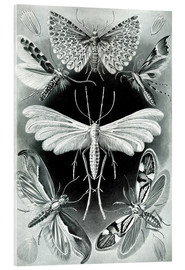 Acrylglas print  Plate of moths - Ernst Haeckel