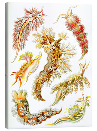 Canvas print  Nudibranches - Ernst Haeckel