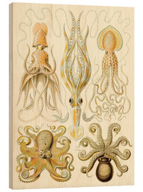Hout print  Squid and octopi - Ernst Haeckel