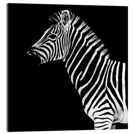 Acrylglas print  Zebra on black - Philippe HUGONNARD