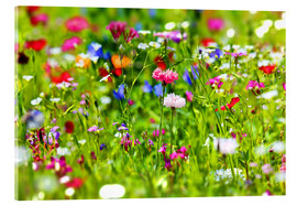 Acrylglas print  Flower meadow - fotoping