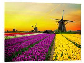 Acrylglas print  Dutch windmills and fields of tulips