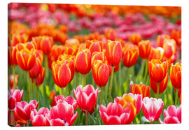 Canvas print  Colorful tulips field
