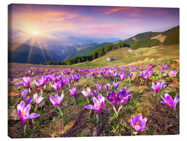 Canvas print  Crocuses and the sun in spring