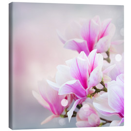 Canvas print  Magnolia flowers on bokeh background