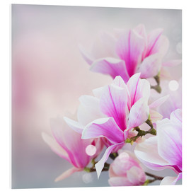 PVC print  Magnolia flowers on bokeh background