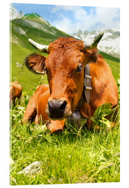 Acrylglas print  Cow with bell on mountain pasture