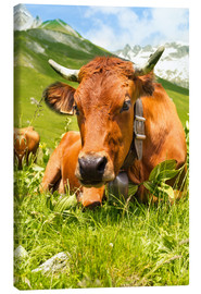 Canvas print  Cow with bell on mountain pasture