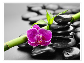 Premium poster  Basalt stones, bamboo and orchid