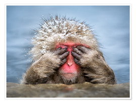 Premium poster Japanese Macaque in a hot spring