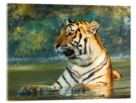Acrylglas print  Tiger lying in the water