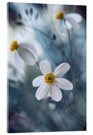 Acrylglas print  Bidens - Mandy Disher