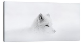 Canvas print  Arctic fox in a snowstorm - Dominic Marcoux