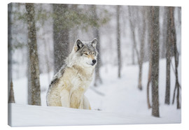 Canvas print  philosophical wolf - Dominic Marcoux