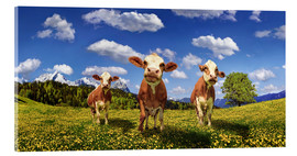 Acrylglas print  Cows on the pasture - Michael Rucker