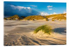 Acrylglas print  Dunes on the island of Amrum, North Sea