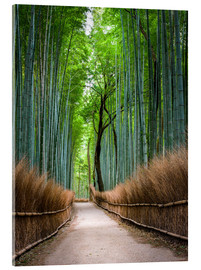 Acrylglas print  Bamboo Forest in Kyoto Sagano Arashiyama, Japan - Jan Christopher Becke