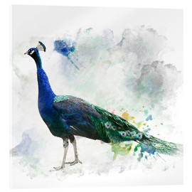 Acrylglas print  Peacock of the page