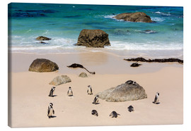 Canvas print  Penguin colony - Catharina Lux