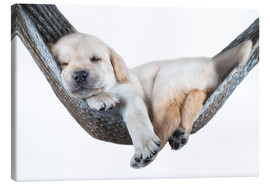 Canvas print  Labrador pup in een hangmat - Beate Margraf
