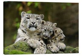 Canvas print  Mother with pups, Irbisse - David & Micha Sheldon