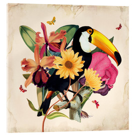 Acrylglas print  Oh My Parrot XII - Mandy Reinmuth
