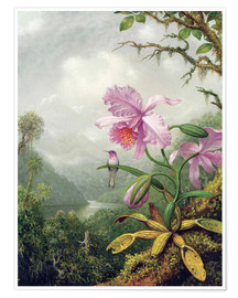 Premium poster  Hummingbird Perched on an Orchid Plant - Martin Johnson Heade
