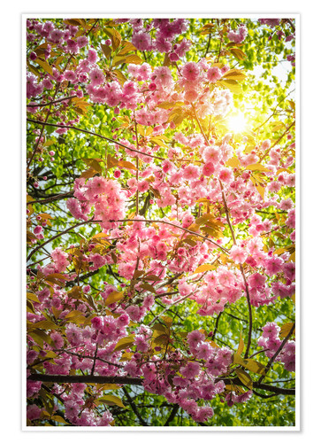 Premium poster Japanese decorative cherry