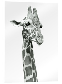 Acrylglas print  Sketch Of A Smiling Giraffe - Ashley Verkamp
