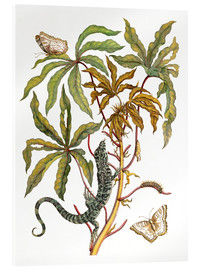 Acrylglas print  cassava with crocodile and butterfly metamorphosis - Maria Sibylla Merian