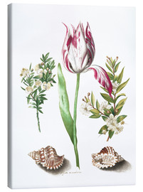 Canvas print  Tulip with two myrtle branches and two shells - Maria Sibylla Merian