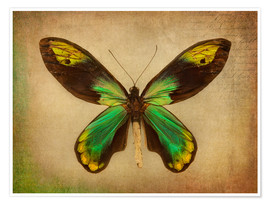 Premium poster Green butterfly