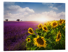 Acrylglas print  Lavender and sunflowers fields , Provence - Elena Schweitzer
