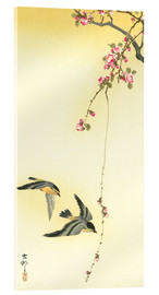 Acrylglas print  Starlings and Cherry Tree - Ohara Koson