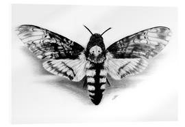 Acrylglas print  Death Head Hawk Moth - Christian Klute
