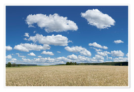 Premium poster Summer sky over cereal field