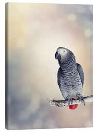 Canvas print  African Grey on a branch