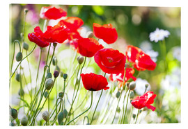 Acrylglas print  Red poppies on a sunny day