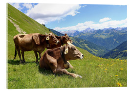 Acrylglas print  Cows relax on the mountain