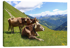 Canvas print  Cows relax on the mountain