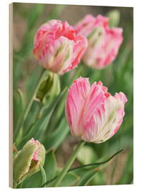 Hout print  Pink tulips