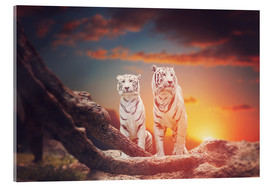 Acrylglas print  Two white tigers