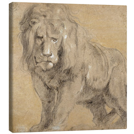 Canvas print  Study of a lion - Peter Paul Rubens