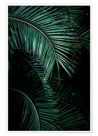 Premium poster Palm leaves 9