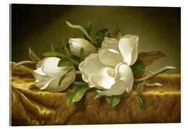 Acrylglas print  Magnolias on Gold Velvet Cloth - Martin Johnson Heade