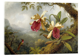 Acrylglas print  orchids and Hummingbird - Martin Johnson Heade