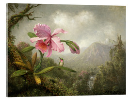 Acrylglas print  Orchid and Hummingbird - Martin Johnson Heade